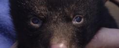 Bear Photos  031806 CPH024